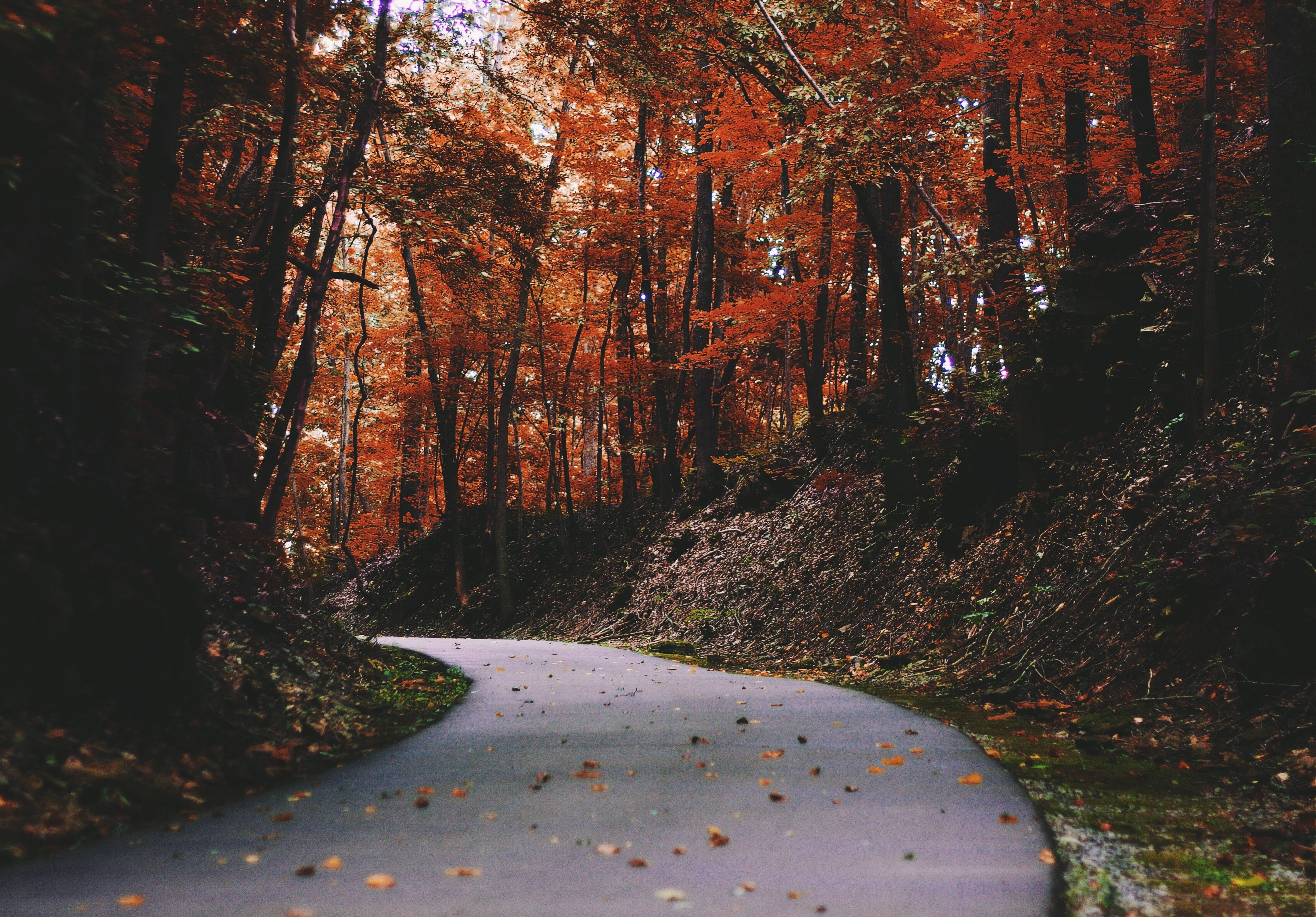 8 Amazing States to See the Best Fall Foliage